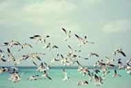 1269150_summer_seagulls_flying.jpg